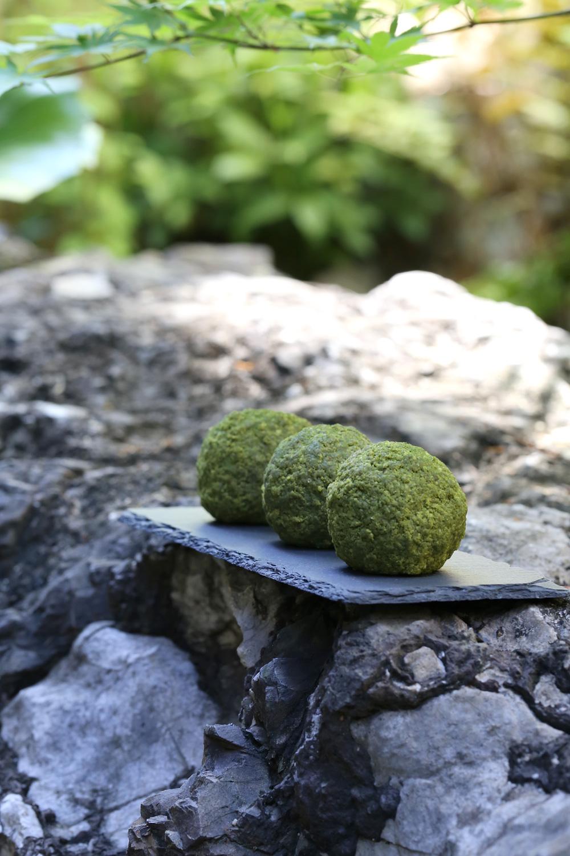 苔玉っちゃ庭イメージ1