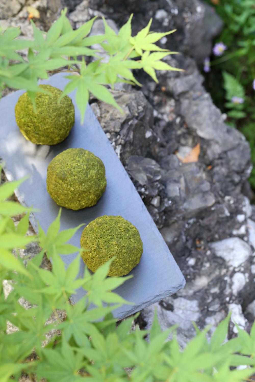 苔玉っちゃ庭イメージ2